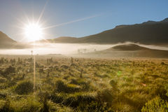 Tajemnicza ranek mgła Fotografia Royalty Free