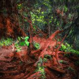 Tajemnicza roślinność tropikalny tropikalny las deszczowy Obraz Royalty Free