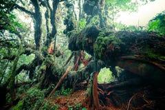 Tajemnicza roślinność tropikalny tropikalny las deszczowy Zdjęcie Stock