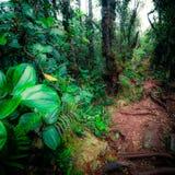 Tajemnicza roślinność tropikalny tropikalny las deszczowy Fotografia Royalty Free