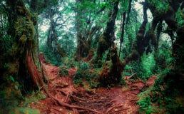 Tajemnicza roślinność tropikalny tropikalny las deszczowy Obrazy Royalty Free