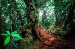 Tajemnicza roślinność tropikalny tropikalny las deszczowy Zdjęcia Royalty Free