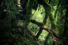 Tajemnicza roślinność tropikalny tropikalny las deszczowy Obrazy Stock