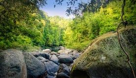 Tajemnicza Tajlandzka dżungla Zdjęcia Stock
