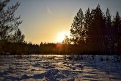 Tajemnicza zimy tajga fotografia stock