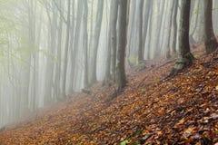 Tajemniczego ranku lasu mgłowy krajobraz zdjęcia stock