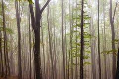Tajemniczego ranku lasu mgłowy krajobraz Obrazy Stock