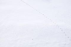 Tajemniczy ślad w śniegu przy Japonia Zdjęcie Stock