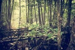 Tajemniczy bagno las Zdjęcie Royalty Free