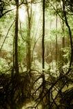 Tajemniczy bagno las Obrazy Stock