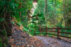 Tajemniczy ciemny jesień las w mgle z drogą, drzewami i gałąź, Jesień ranek w Karpackich górach obrazy stock