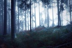 Tajemniczy ciemny lasu krajobraz Zdjęcia Royalty Free