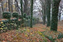 Tajemniczy cmentarz durnie z drzewami Zdjęcia Royalty Free