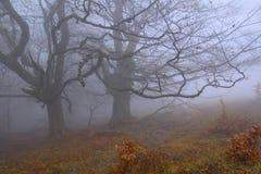 Tajemniczy drzewa Zdjęcia Stock