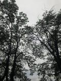 Tajemniczy drzewa Zdjęcie Royalty Free