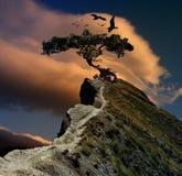 tajemniczy drzewo Zdjęcia Royalty Free