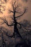 tajemniczy drzewo Zdjęcie Royalty Free
