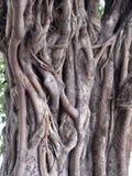 tajemniczy drzewo Obrazy Royalty Free