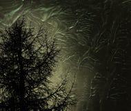 Tajemniczy drzewo Zdjęcie Stock