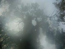 Tajemniczy drzewo w mglistym ranku Zdjęcia Royalty Free