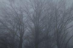 Tajemniczy krajobraz mgłowy las Zdjęcie Stock