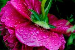 Tajemniczy kwiat Fotografia Stock