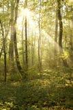 Tajemniczy las obrazy stock