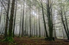 Tajemniczy las zdjęcie royalty free