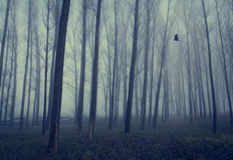 Tajemniczy las mgłowy dzień zdjęcie royalty free