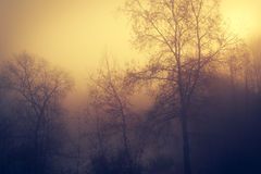 Tajemniczy las mgłowy dzień Obraz Royalty Free