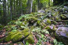 Tajemniczy las z mech i kamieniami Obrazy Royalty Free