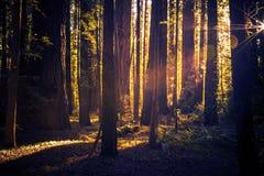 Tajemniczy Lasowy ślad Obrazy Royalty Free