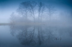 tajemniczy mgłowy lasowy ranek Zdjęcie Royalty Free