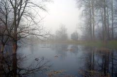 tajemniczy mgłowy lasowy ranek Fotografia Stock
