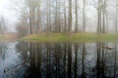 tajemniczy mgłowy lasowy ranek Obraz Royalty Free