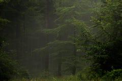 Tajemniczy mglisty drewno fotografia stock