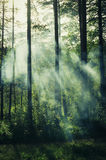 Tajemniczy oświetlenie w ciemnym lesie Zdjęcie Stock