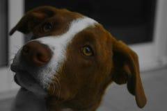 Tajemniczy pies zdjęcia stock