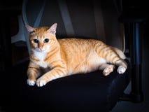 Tajemniczy Pomarańczowy Imbirowy Gruby kota odpoczynek z Poważnym Zdjęcia Stock