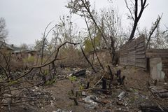 Tajemniczy straszny las, gałąź drzewa, rocznik, Mglisty jesień ranek nad śmierć las obraz stock