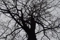 Tajemniczy straszny las, gałąź drzewa, rocznik, Mglisty jesień ranek nad śmierć las zdjęcia royalty free