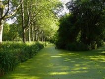 Tajemniczy strumień zakrywający z zielonym duckweed Fotografia Royalty Free