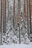 Tajga po opadu śniegu Obrazy Stock