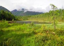 Tajga in sayan mountains Royalty Free Stock Images