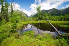 Tajga in sayan mountains - buryatia - russia Royalty Free Stock Images
