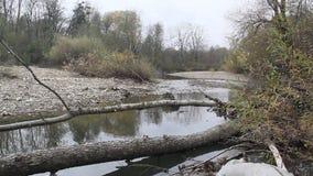 Tajgi rzeka z spadać drzewami zdjęcie wideo