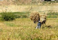 Tajik farmer carries a sheaf of straw Stock Photos