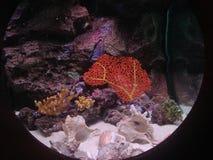 Tajlandia akwarium porthole Koralowy widok fotografia stock