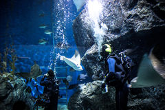 TAJLANDIA BANGHOK 2013 MARZEC 29 akwalungów nurków cieszy się Fotografia Royalty Free