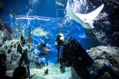 TAJLANDIA BANGHOK 2013 MARZEC 29 akwalungów nurków cieszy się Fotografia Stock